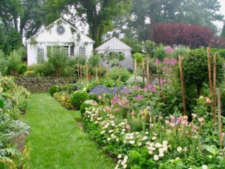 Cut flower garden, Baltimore MD