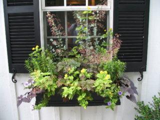 Windowbox display