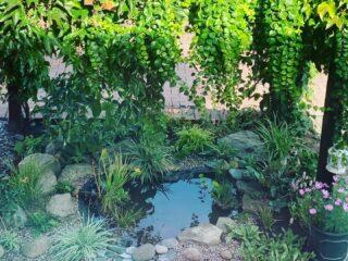 Small wildlife pond, London
